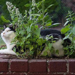 Los gatos y las plantas: beneficiosas, excitantes, repelentes y tóxicas
