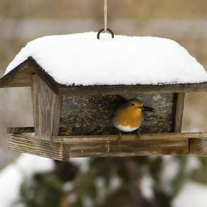 Cómo atraer a los pájaros en invierno