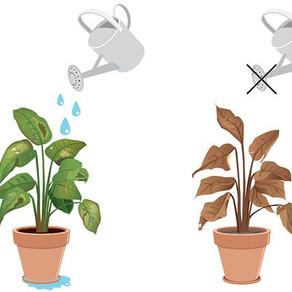 Los errores que hacen sufrir a tus plantas