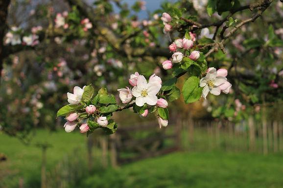 blossom-6219518_1920.jpg