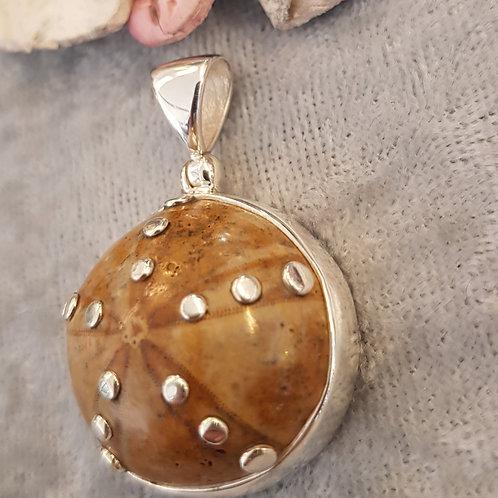 Fossiler Seeigel, Anhänger gefasst in Silber