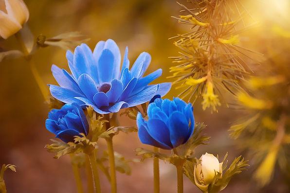 Blue flower on gold.jpg