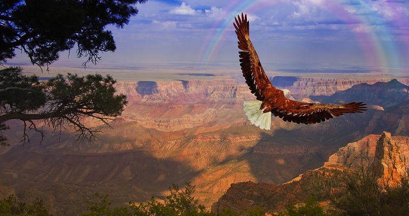 Eagle over Grand Canyon.jpeg