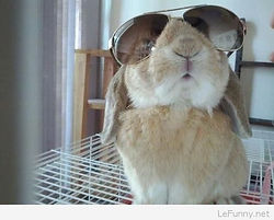 Funny-bunny-pic.jpg