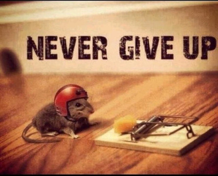 souris never give up.jpg