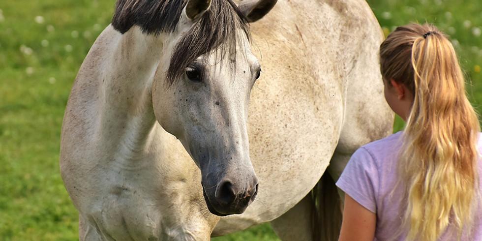 """Journée """"Bulle de poney"""" - 6/11 ans"""