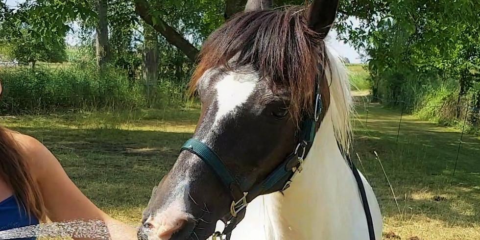 """Journée """"Bulle de cheval"""" - 12 ans et +"""
