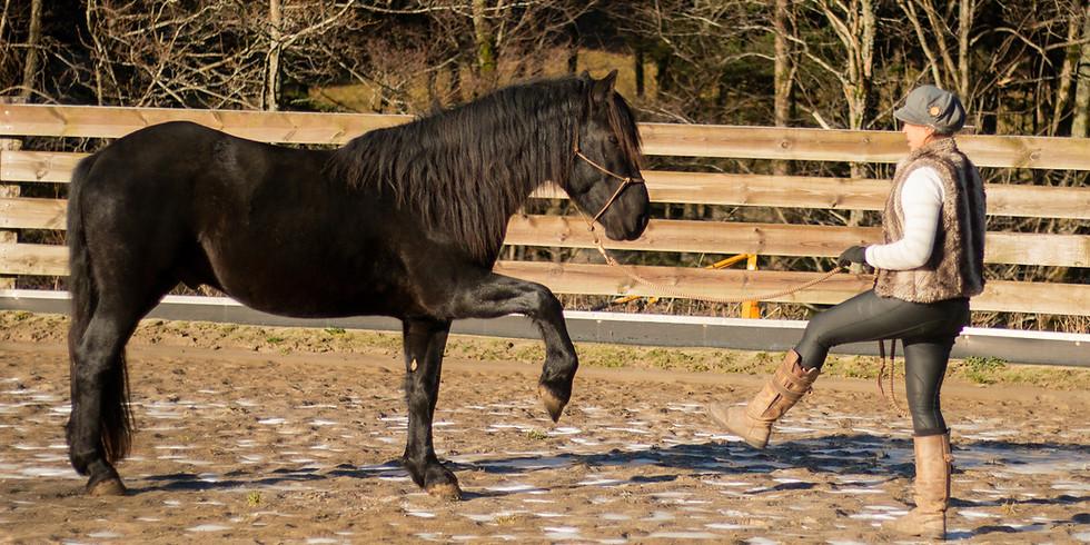 Journée pratique Horsemanship: relation humain/cheval