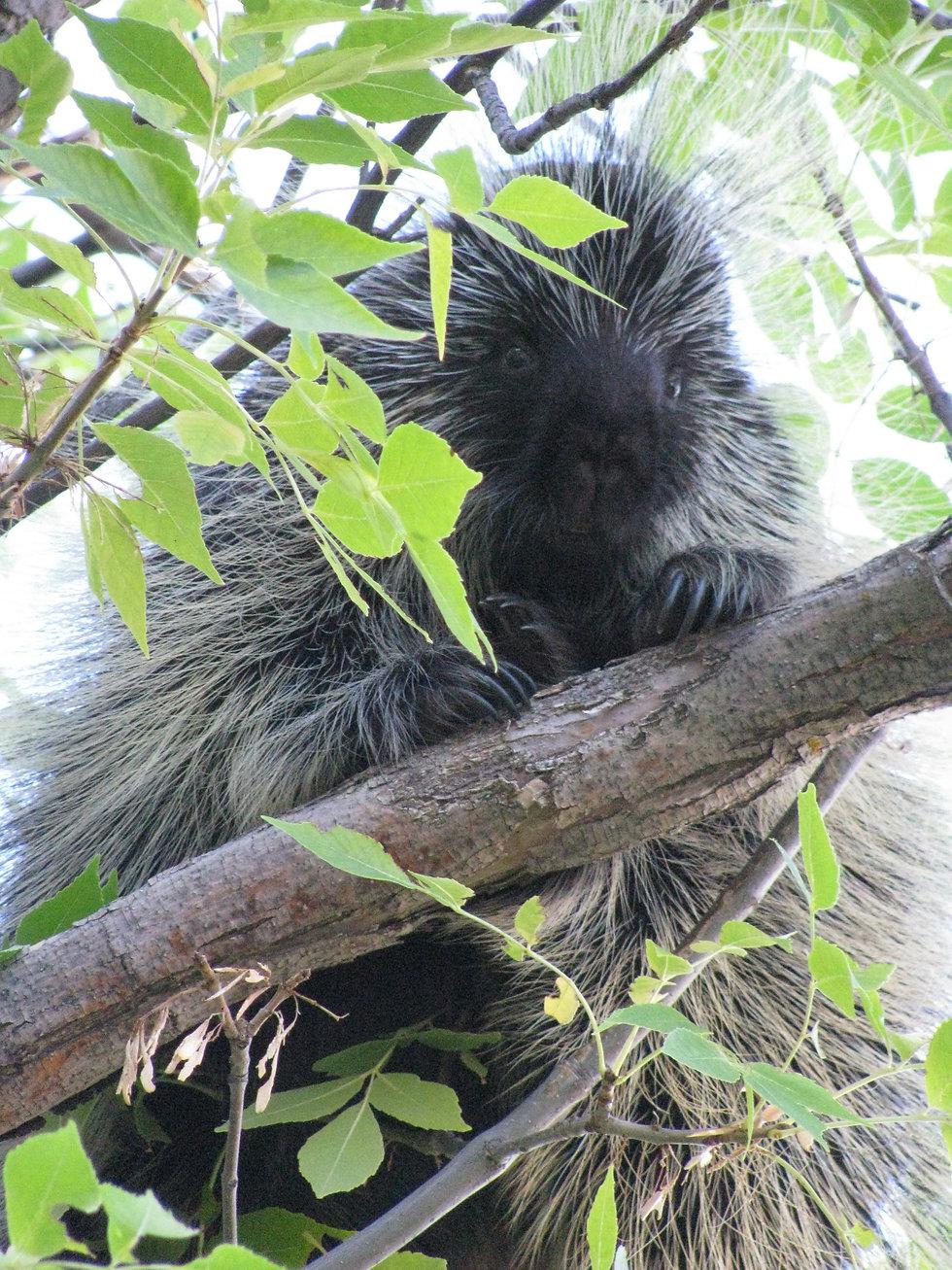 Prickly Bowhunting Topics