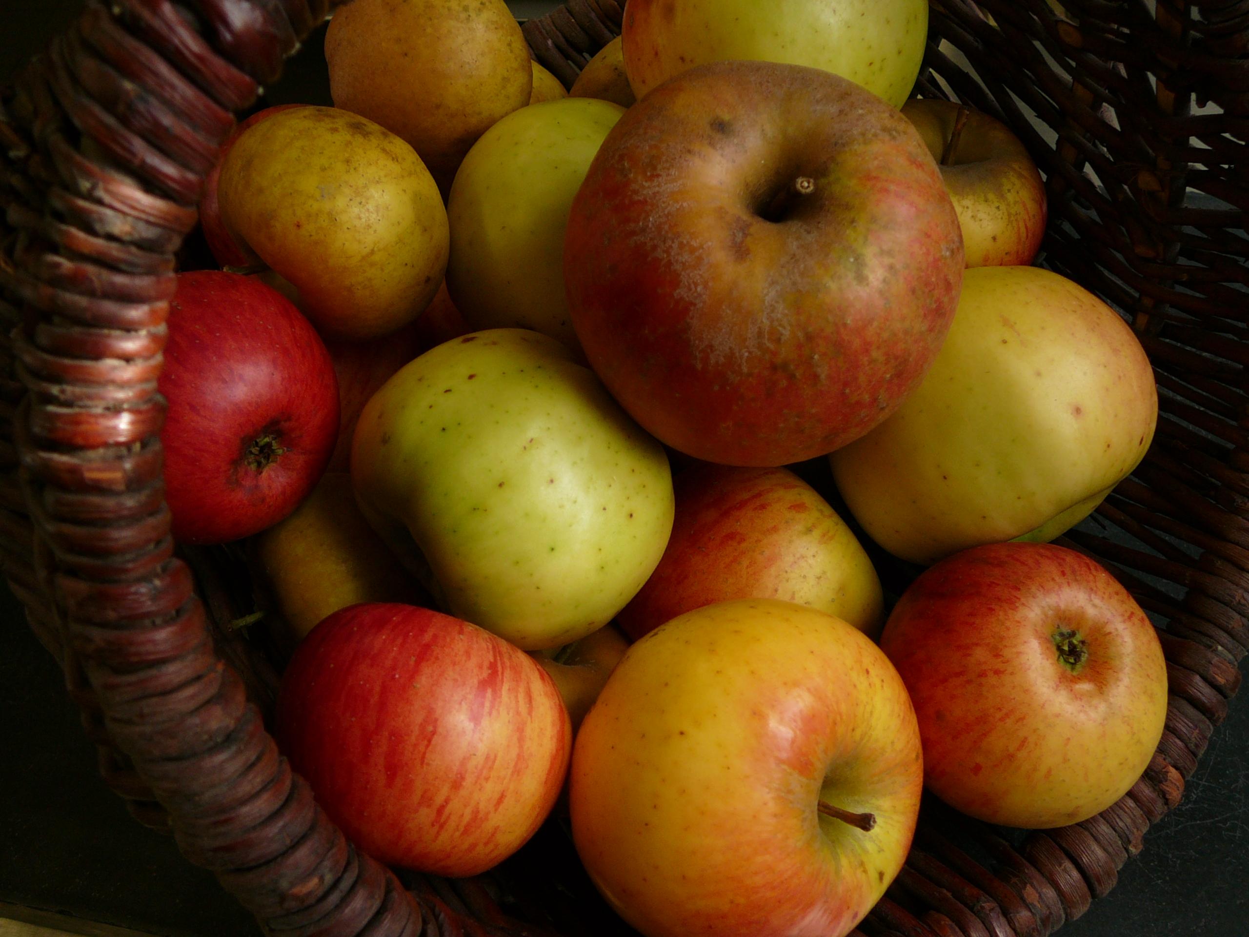 Pommes octobre 2015 018