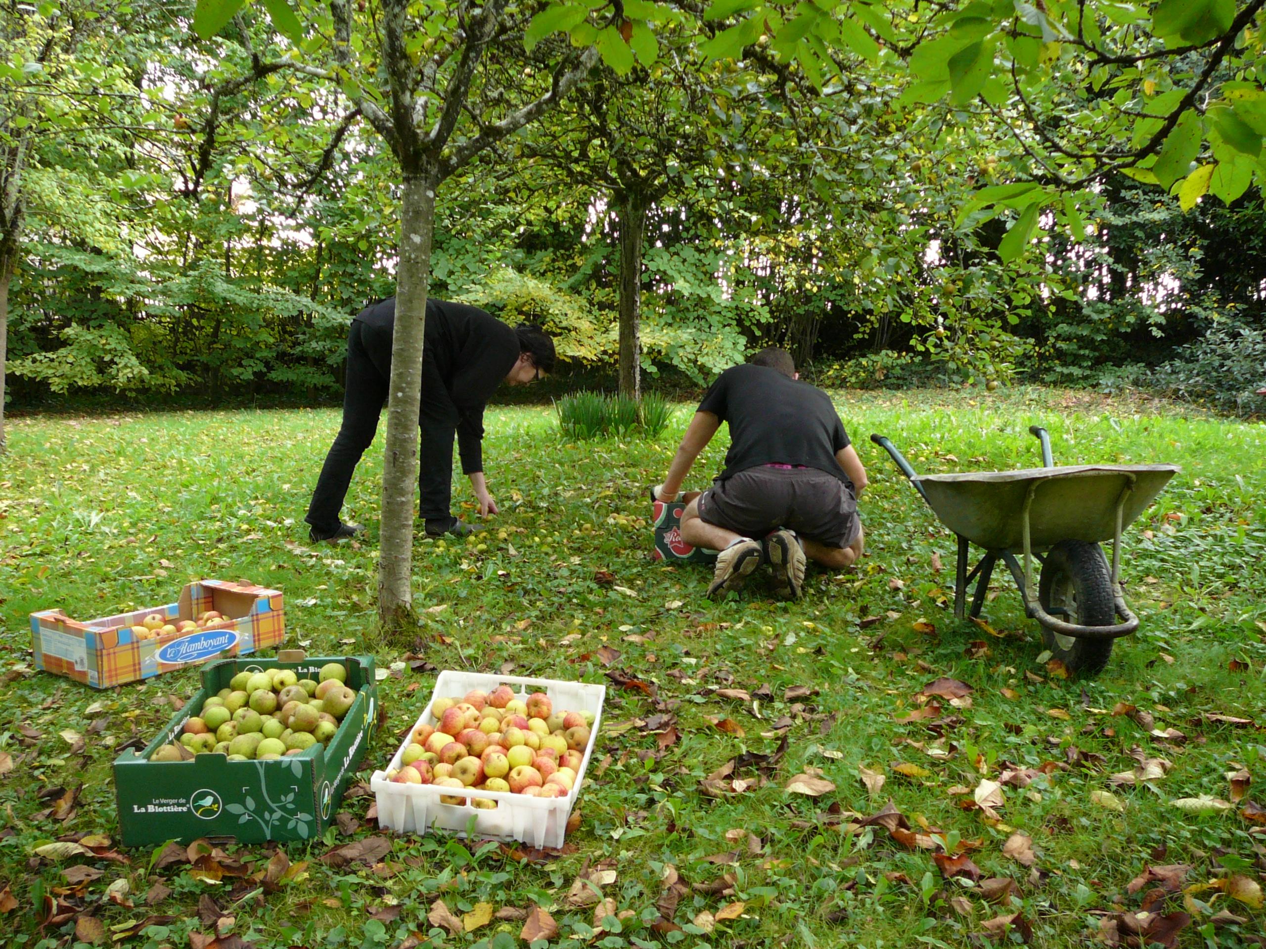 pommes coings et potimarron automne 2015 016