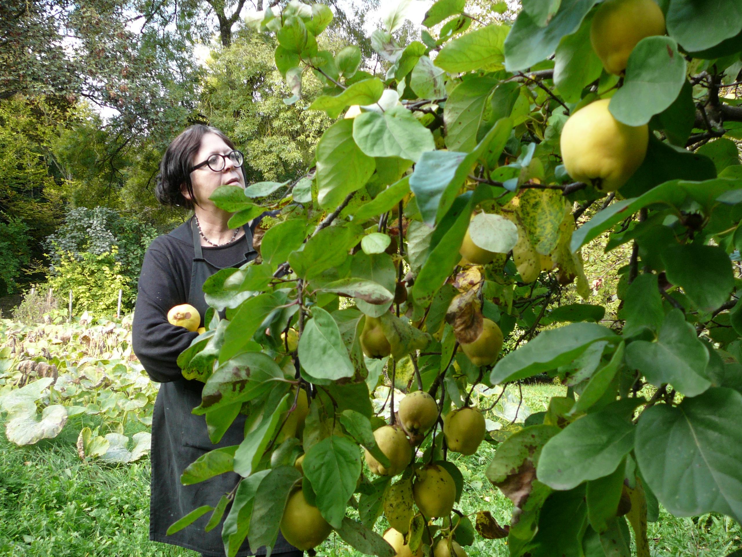 pommes coings et potimarron automne 2015 005