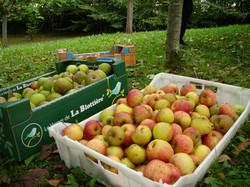 pommes coings et potimarron automne 2015 017