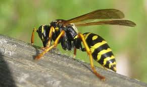 Les piqûres d'insectes: Conduite à tenir