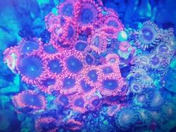 coral 6.jpg