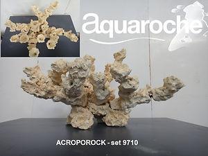 acroporock.jpg
