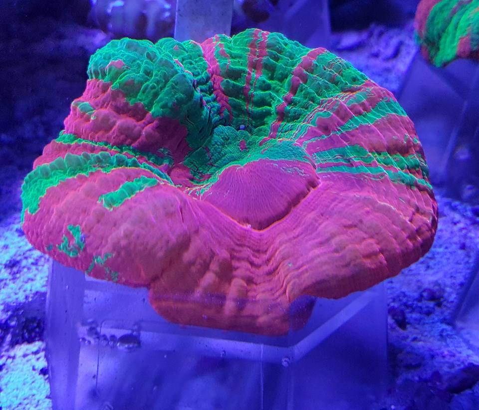 coral 7.jpg