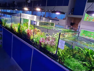 plants 8.jpg