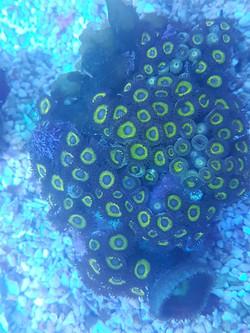 coral 3 - Copy.jpg