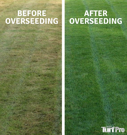 overseeding.png