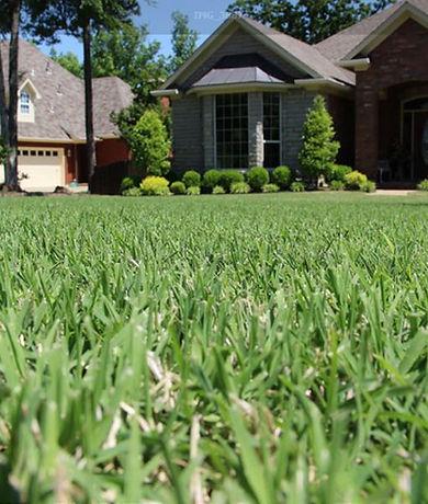 Grass & Home