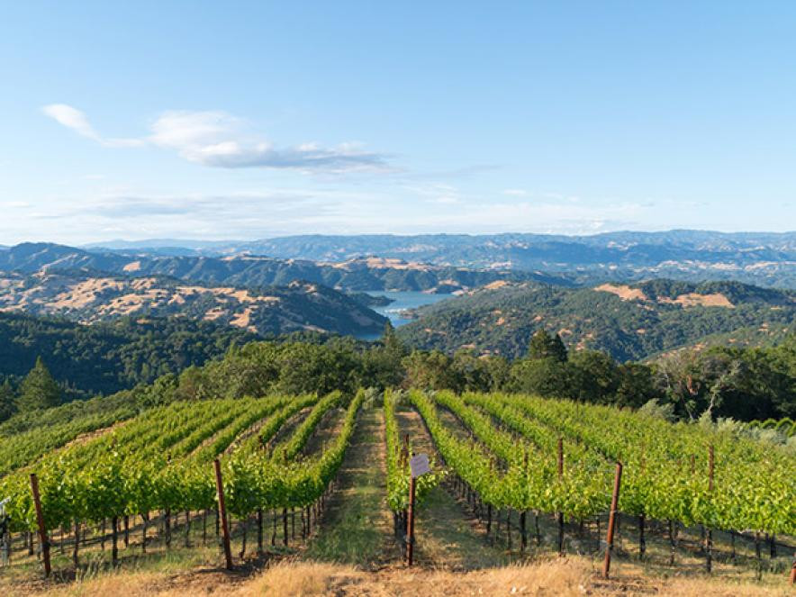 Top Sonoma wineries to visit for first timers