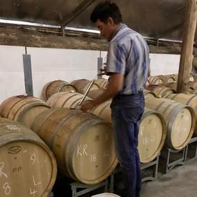 Bindi tasting report - Points on Wine