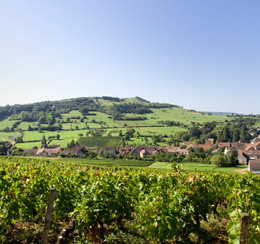 Part 4: A top wine at below $15 - Burgundy
