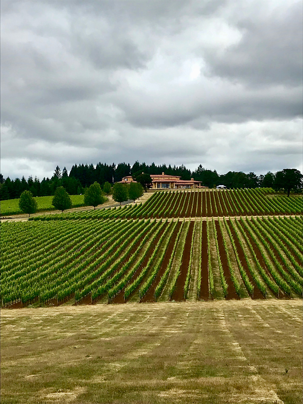 Top Oregon wineries to visit for first timers