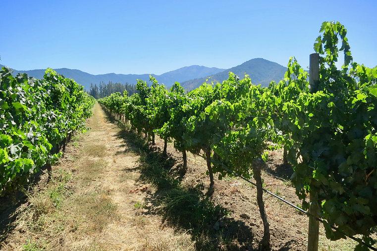 Vins par Alexander   Quebec Wine Agency