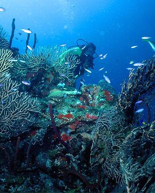 Posada Del Sol Dive 1-9.jpg