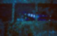 Posada Del Sol Wreck Dive-19.jpg