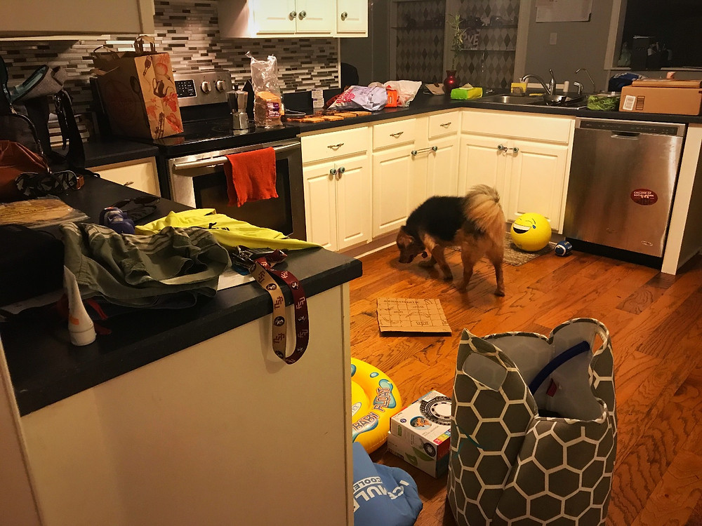 Typical daily mess, and Cali girl licking up any crumbs she can find.