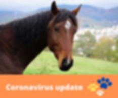 Coronavirus Update - EQUINE Picture.JPG