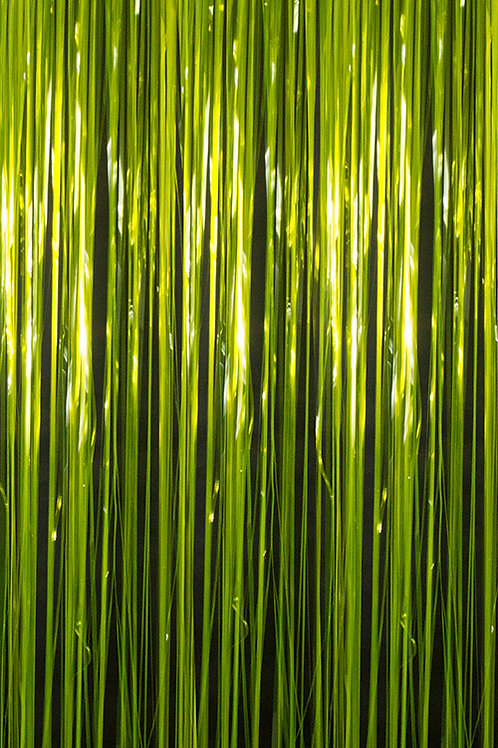 Fluorescent Lemon Fringe Curtain