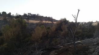 אחרי השריפה: תיעוד מיוחד של חיפה השרופה!