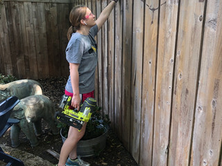 DIY Stained Fence