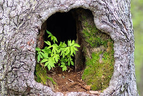 plants-in-hollow-tree-3576514_1920.jpg