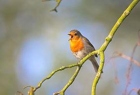 small-bird-2224946_1280.jpg
