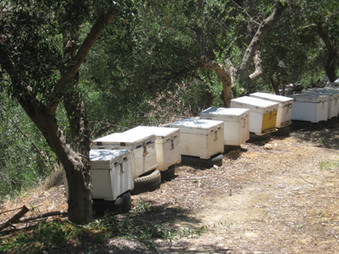 mehiläiset_toiminnassa_2.JPG