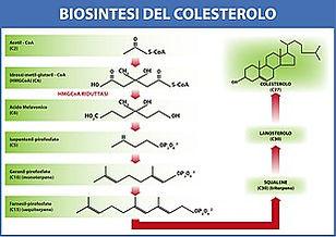 colesterolo1.jpg