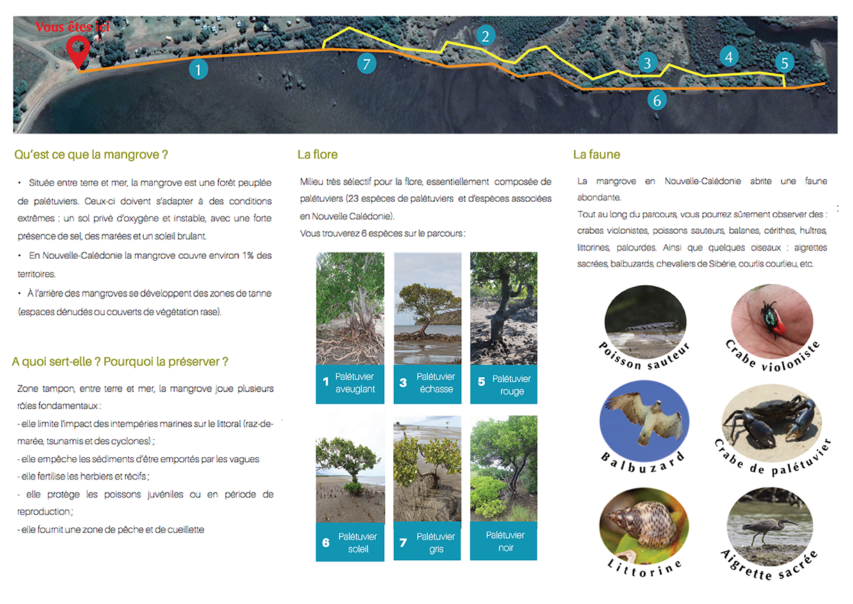 Sentier mangrove - BOA DELEC