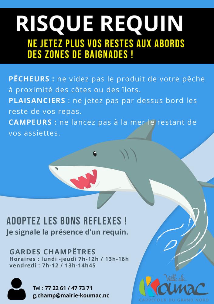 Risque requin