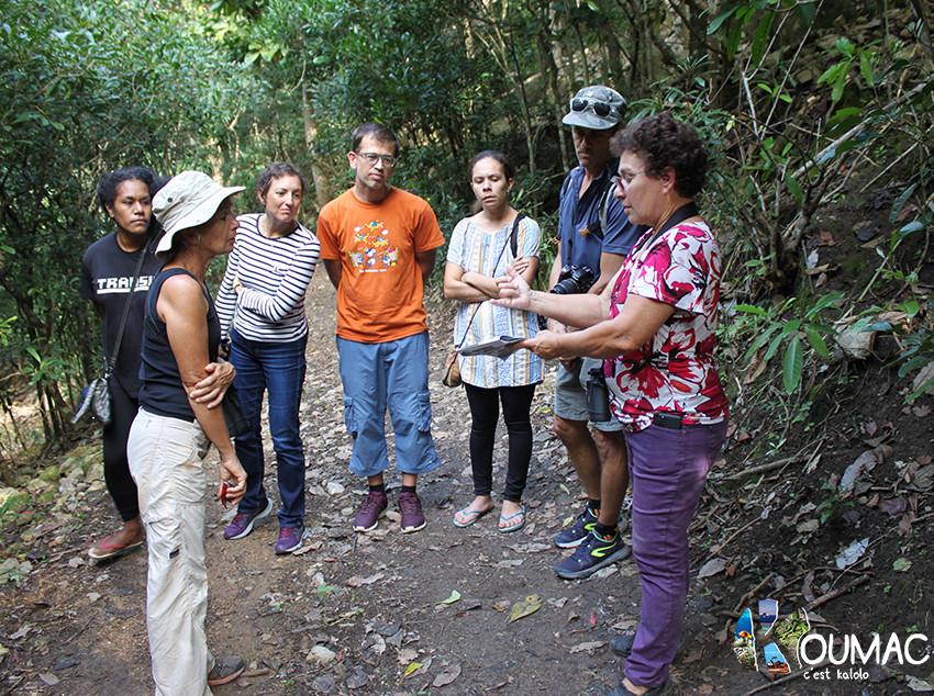 Société Calédonienne d'Ornithologie - Forêt de  la Vierge