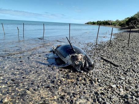 Baignade déconseillée sur les plages de Koumac