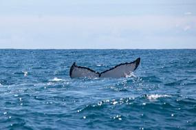 Vitória: Entre Baleias e Golfinhos