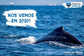 Temporada 2019 de Observação de Baleia-jubarte Chega ao Fim no Brasil