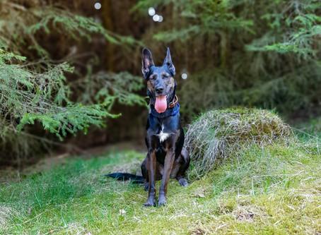 Ein Hund zieht ein – Neues Leben, neues Ich