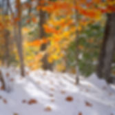 Two feet of snow on halloween while the maple trees are still glowing red and gold. Photograph by Ken Schuster.