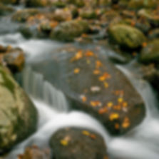 Slow shutter and rushing water softly frames a wet rock covered with gold leaves and green moss. Photograph by Ken Schuster. Photograph by Ken Schuster.